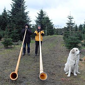 Planohr und Stella im Weihnachtswald
